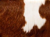 Предпосылка меха коровы  Стоковая Фотография RF