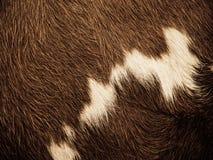 Предпосылка меха коровы Стоковые Изображения