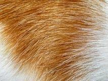 Предпосылка меха котов имбиря Стоковая Фотография RF