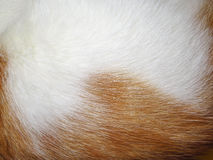 Предпосылка меха котов имбиря Стоковое фото RF