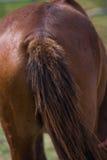 Предпосылка меха лошади Брайна Стоковые Фотографии RF