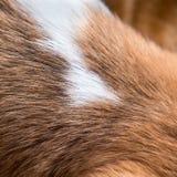Предпосылка меха собаки Стоковое Изображение RF