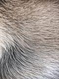 Предпосылка меха собаки Стоковое Фото