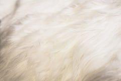 Предпосылка меха ` s собаки Стоковое Изображение
