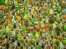 Предпосылка черепашки насекомого Стоковые Фото