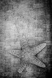 Предпосылка морских звёзд черно-белая текстурированная Стоковое Изображение
