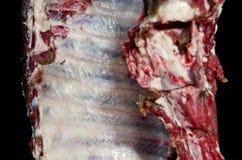 Предпосылка мяса Стоковые Изображения