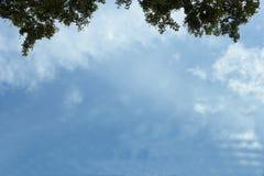 Предпосылка неба и лист Стоковое фото RF