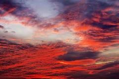 Предпосылка неба с красными цветами Стоковое Изображение