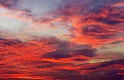 Предпосылка неба с красными цветами Стоковые Изображения RF