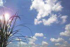 Предпосылка неба Стоковая Фотография RF
