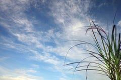 Предпосылка неба Стоковая Фотография