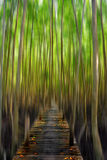 Предпосылка нерезкости движения леса любимого места хеллоуина глубокого ого-зелен деревянного Стоковое Изображение