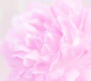 Предпосылка нерезкости розового пинка Стоковые Фото
