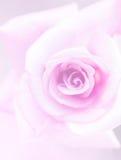 Предпосылка нерезкости розового пинка Стоковое фото RF
