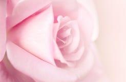 Предпосылка нерезкости розового пинка Стоковая Фотография