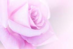 Предпосылка нерезкости розового пинка Стоковые Изображения RF