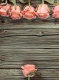 Предпосылка дня валентинок розовых роз деревенская Стоковые Фотографии RF