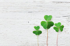 Предпосылка дня Patricks Святого с зеленым shamrock на белом взгляд сверху текстуры Стоковые Изображения