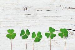 Предпосылка дня Patricks Святого с зеленым shamrock на белом деревенском взгляд сверху текстуры Стоковое Изображение