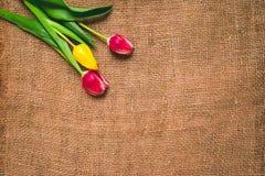 Предпосылка 8-ое марта дня ` s женщин с весной цветет Стоковое Изображение RF