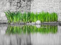 Предпосылка озера сад Стоковая Фотография RF