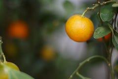 Предпосылка оранжевого дерева и лист Стоковые Изображения RF