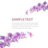 Предпосылка орхидеи Стоковое фото RF