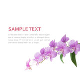 Предпосылка орхидеи Стоковые Изображения