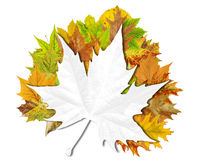 Предпосылка осени абстрактная флористическая с местом для вашего текста Стоковое фото RF