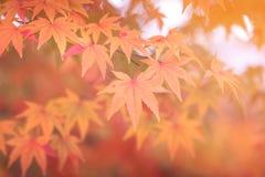 Предпосылка осени абстрактная, Южная Корея Стоковое Фото