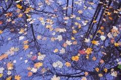 предпосылка осени выходит вода Стоковые Изображения