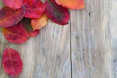 Предпосылка осени, деревянная доска и покрашенные листья в угле Стоковые Изображения RF