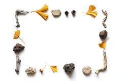 Предпосылка осени с листьями гинкго стоковая фотография