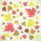 Предпосылка осени с листьями Стоковое Фото