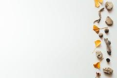 Предпосылка осени с листьями Ginko стоковое фото