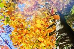 Предпосылка осени с цветастыми листьями Стоковая Фотография RF