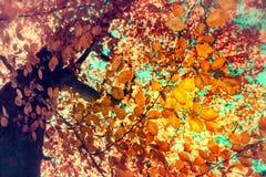 Предпосылка осени с цветастыми листьями Стоковое Фото