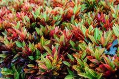 Предпосылка осенних листьев Стоковые Фотографии RF