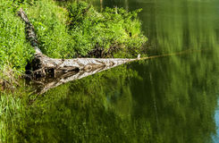 Предпосылка отражения пульсации воды Стоковые Изображения RF