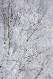 Предпосылка от ветвей березы Стоковые Изображения RF