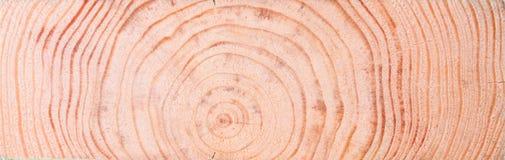 Предпосылка от деревянного концентрического раздела Стоковое Фото