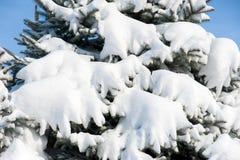 Предпосылка от елей в снежке Стоковое фото RF