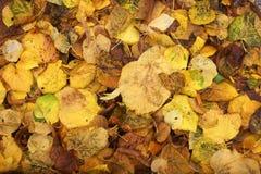Предпосылка от пожелтетой листвы осени Стоковое Изображение RF