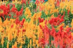 Предпосылка от сада цветков стоковые фотографии rf