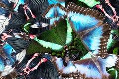 Предпосылка от смешанных пестротканых бабочек Стоковые Изображения RF