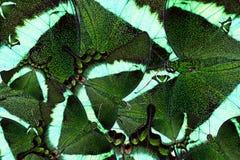 Предпосылка от смешанных пестротканых бабочек Стоковое фото RF