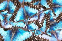 Предпосылка от смешанных пестротканых бабочек Стоковое Фото