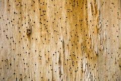 Предпосылка от старой деревянной доски Старая стена сдержанная бичами Стоковое Изображение RF