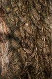 Предпосылка от текстуры дерева Стоковые Изображения RF